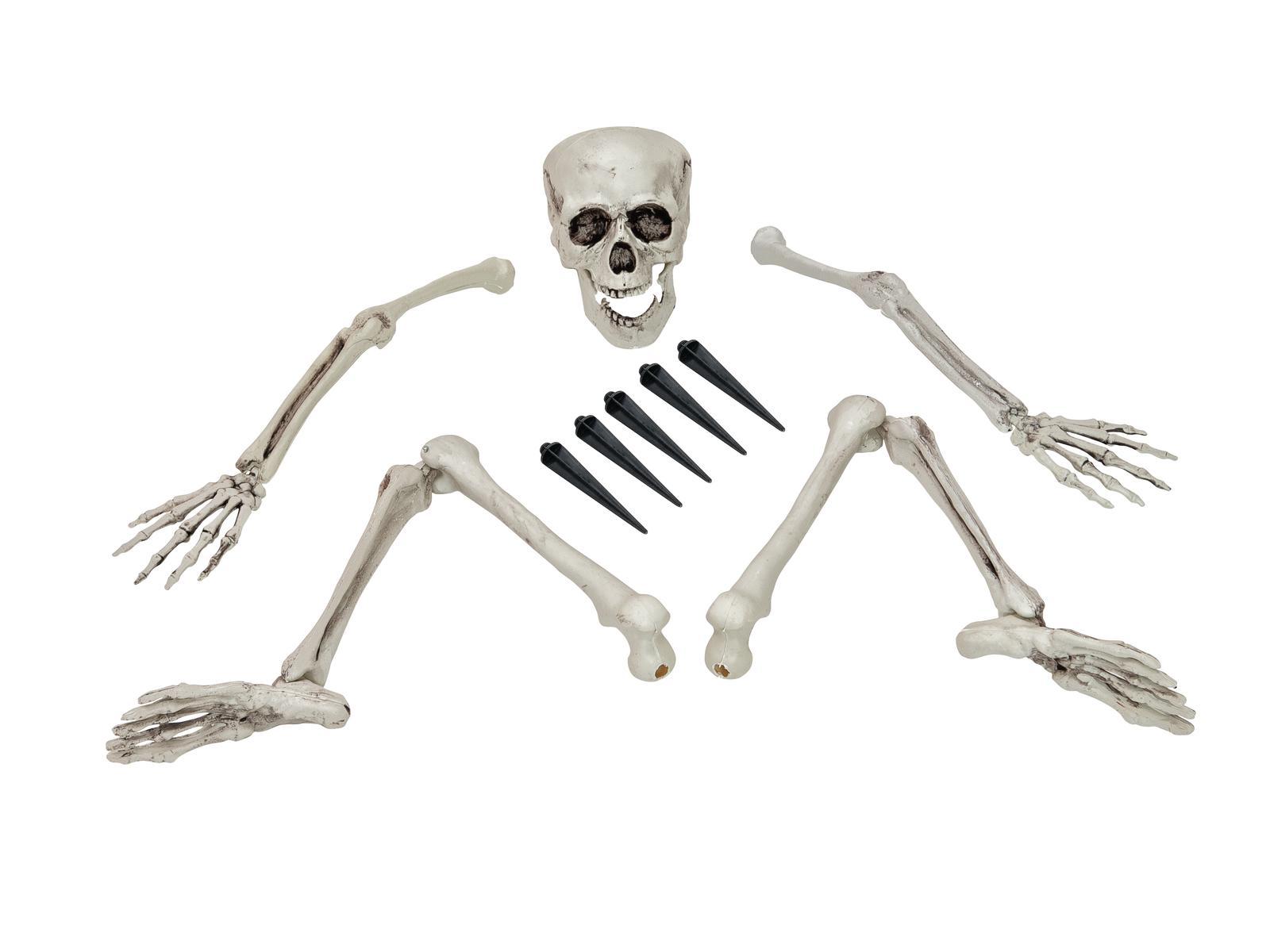 Halloween lebka a končetiny kostlivce
